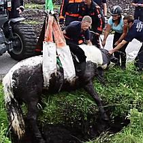 Feuerwehr rettet Pferd aus Straßengraben
