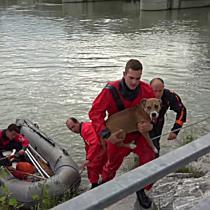 2018 06 01FMT BF Salzburg rettet Hund