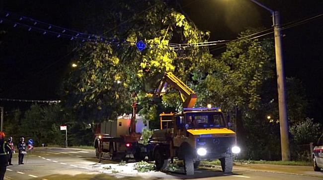 Baum stürzt in Berchtesgadener Straße in Oberleitung